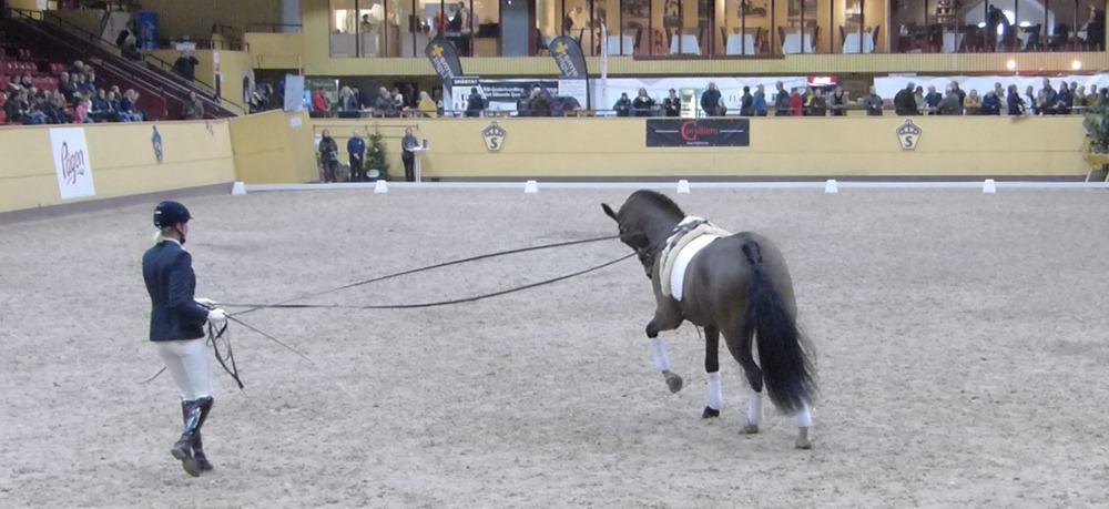Show_Bruksprov_Dreamsportshorses