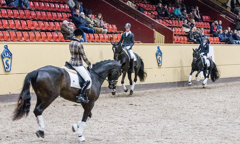 Show_Bruksprov_Dreamsportshorses10