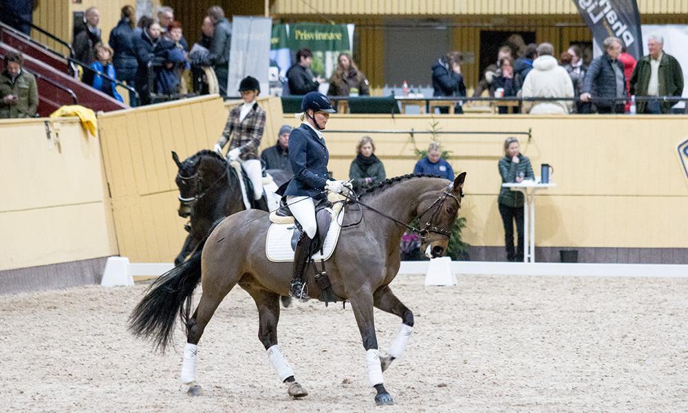 Show_Bruksprov_Dreamsportshorses9