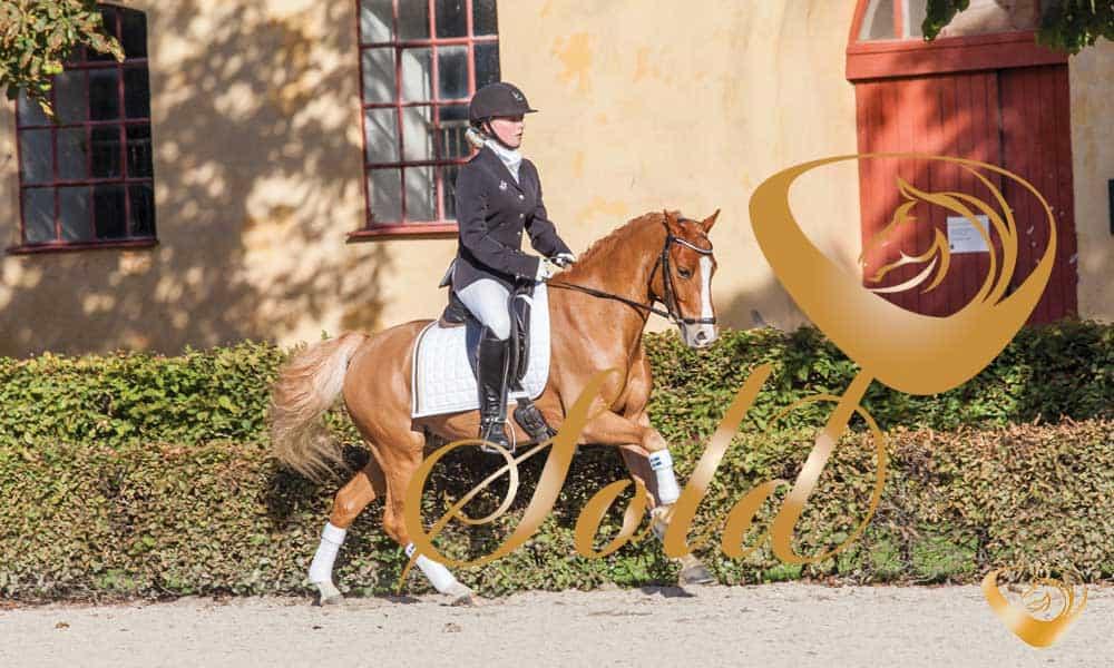 Ares Dream Sports Horses